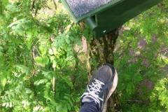 boom_klimmen_venraygroen