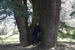 grote_bomen_venraygroen