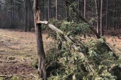 natuur_boomverzorging_venraygroen