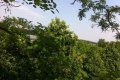 natuur_boomverzroging_venraygroen